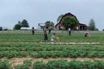 Fellows from the Food Justice Lab's Appalachian Food Justice Institute working at Sprouting Farms in Talcott, West Virginia